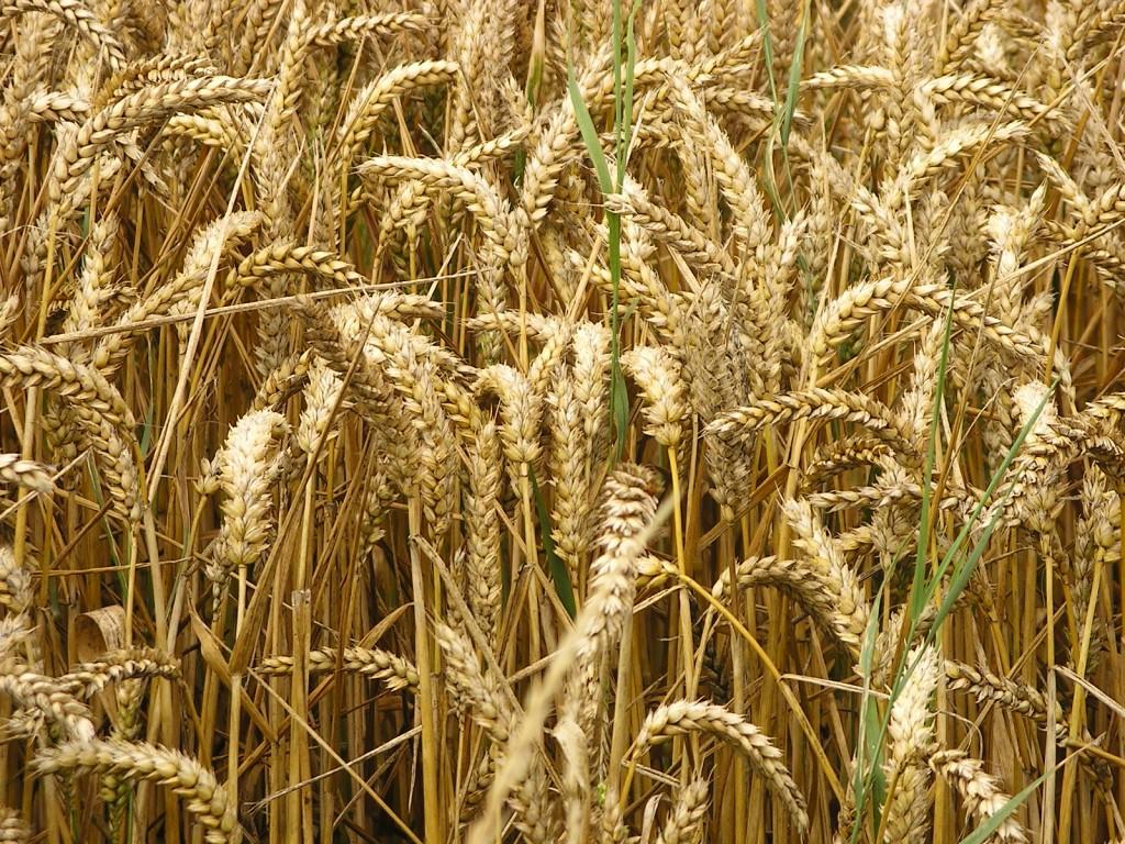 Pane ai cereali con semi misti