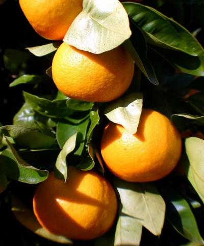 Liquore mandarinetto